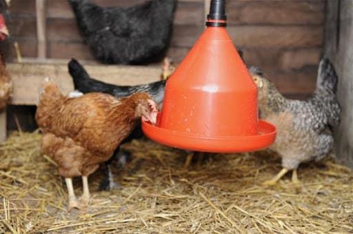 آبخوری مرغ